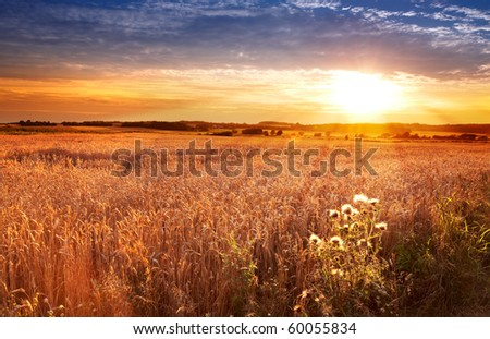 A photo of Sunset at the countryside, denmark - time for harvest - stock photo
