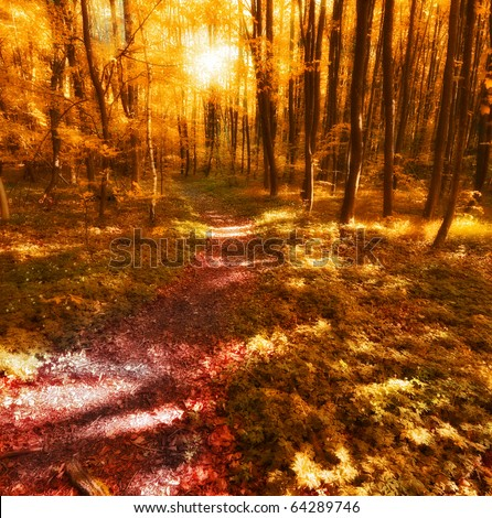 A  photo of sunset in the forest at autumn - stock photo