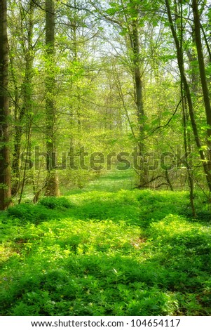 A photo of Sunshine in the green forest - stock photo