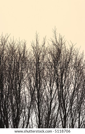 A photo of winter trees in sunset - stock photo