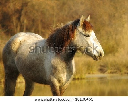 A photo realistic picture showing a white horse in the bushes - stock photo