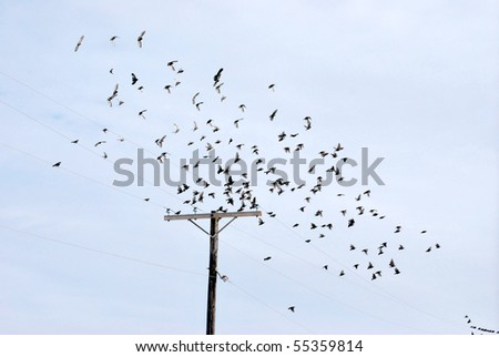 A photograph of a flock of birds flying above a power line. - stock photo