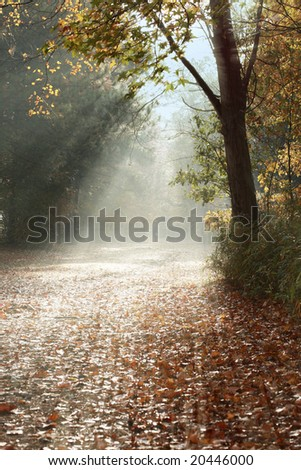 a picture of sunlight falling on trail during fall - stock photo