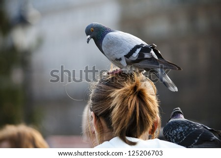 A pigeon sitting on a girls head - stock photo