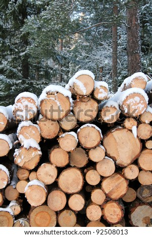 A pile of pine logs in winter snow with forest background. Selective focus. - stock photo