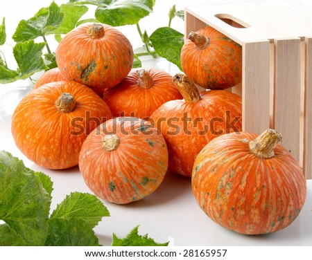 A pile of pumpkins with  vines - stock photo