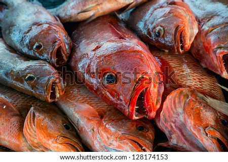 A pile of red snapper - stock photo