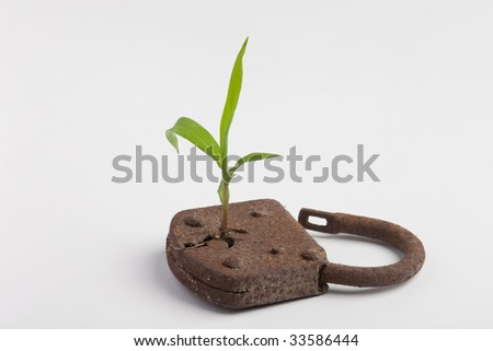 a plant is growing out of a lock - stock photo