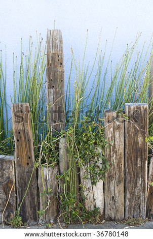 A planter of green shoots against a blue stucco wall supported by old wooden posts.  Image was shot along a coastline location and is classic waterfront decor. - stock photo