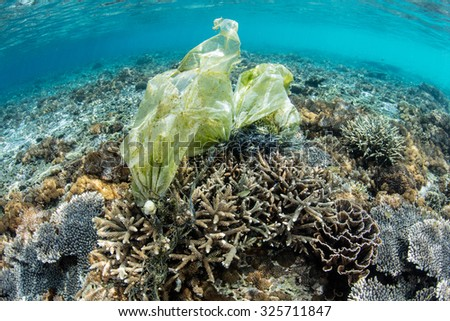 A plastic bag has been caught on coral in Komodo National Park, Indonesia. Plastic is highly dangerous to many marine species, especially turtles which mistake bags for edible jellyfish. - stock photo