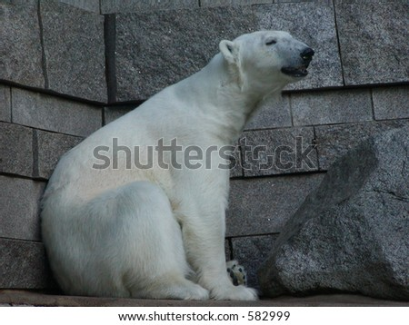 A polar bear sitting in front of a wall - stock photo