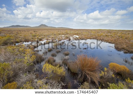 A pool of water in fynbos vegetation on the Cape peninsula, South Africa - stock photo