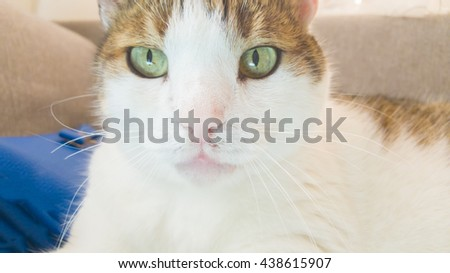 A portrait of a beautiful white cat  - stock photo