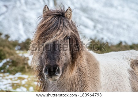 A portrait of a horse on a mountain - stock photo