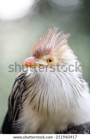 A portrait of an african bird. - stock photo
