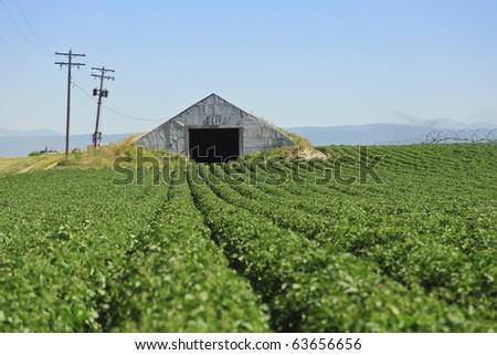 A potato storage cellar waits for the harvest. - stock photo