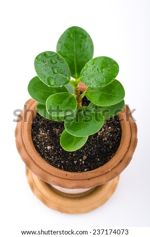 A potted plant just beginning to grow. - stock photo