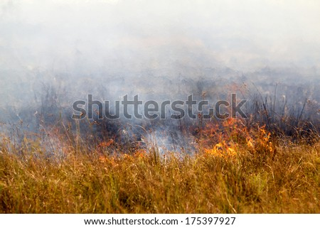 A prairie fire by the road in the afternoon. - stock photo