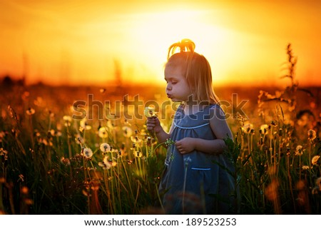 A pretty happy little girl blowing a dandelion in the field at dawn when the sky is orange - stock photo
