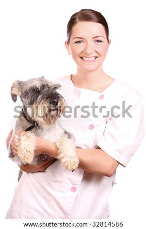 A pretty smiling veterinarian holding a Miniature Schnauzer and smiling. - stock photo