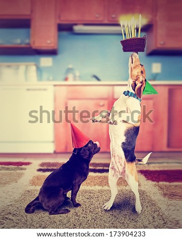 a pug and a beagle with birthday cake and an instagram filter done vintage style for a retro look - stock photo