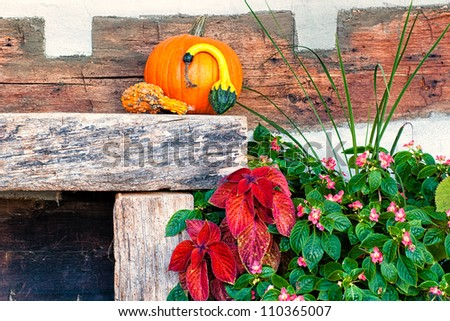 A pumpkin and some decorative plants sit against a rustic wall. - stock photo