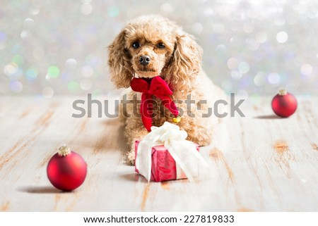 a puppy against a holiday motif background - stock photo