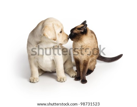 A puppy and a cat - stock photo