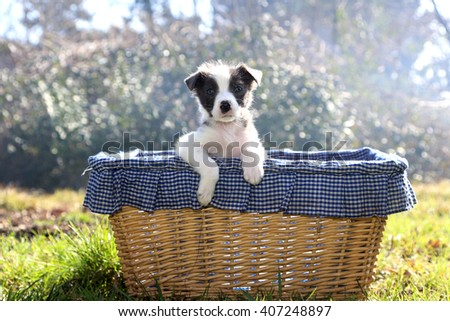 A puppy dog, she gets up and leans his kennel made with a wicker basket - stock photo
