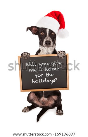 A puppy dog sitting up and holding a sign asking for a home for Christmas - stock photo