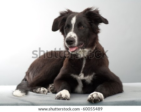 a puppy in studio - stock photo