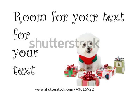 "a pure breed ""Bichon Frise"" with a red bow, with wrapped gifts ""isolated on white"" with ""room for your text"" - stock photo"
