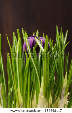 A purple blossom inbetween green leaves - stock photo