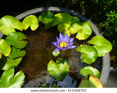 A purple lotus flower blooming on water inside a big clay jar. - stock photo