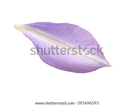 A purple petal clematis - stock photo