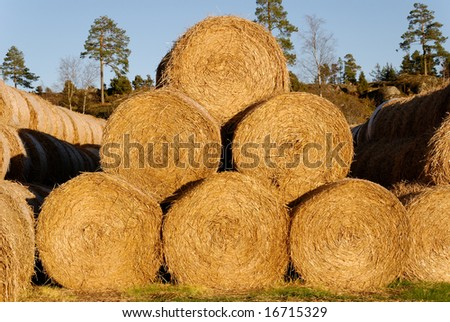 A pyramid of 6 hay bails, lit by low autumn sun. - stock photo