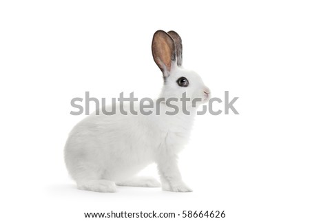 A rabbit - stock photo