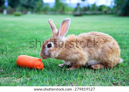 A rabbit eating carrot in garden with blurred background - stock photo