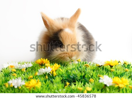 A rabbit with grass isolated on white background - stock photo