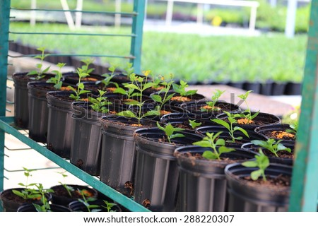 A rack holding different plants being grown for production for plant nurseries.  - stock photo
