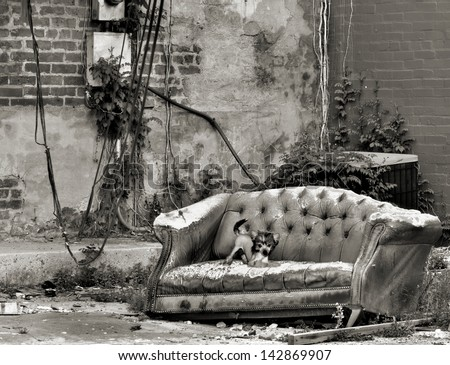 A rascal of a puppy laying claim to an old sofa in an empty city lot. - stock photo