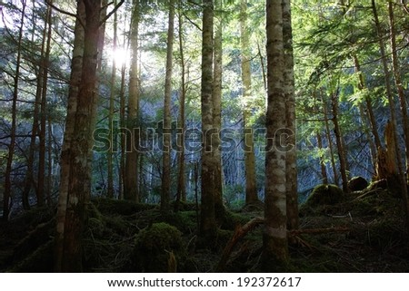 A ray of sun shining through the forest trees. - stock photo
