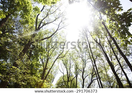 A ray of sunlight in the trees. Sunny day in the forest. Blue sky and the sun in the leaves of trees. - stock photo