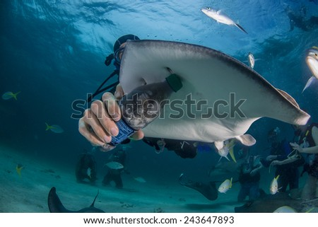A re-purposed water bottle used to feed a southern ray - stock photo