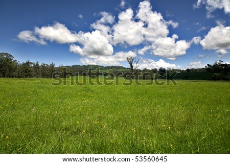 a real green field in the summer time with beautiful blue sky and yellow dandelion flowers - stock photo