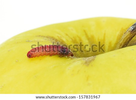 a red caterpillar in a yellow apple - stock photo