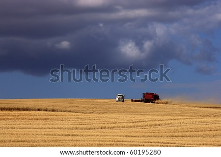 A red combine harvests crops in the wide open field. - stock photo