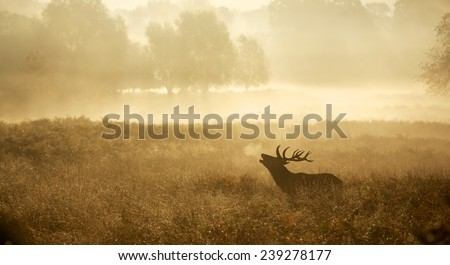 A red deer stag silhouette - stock photo