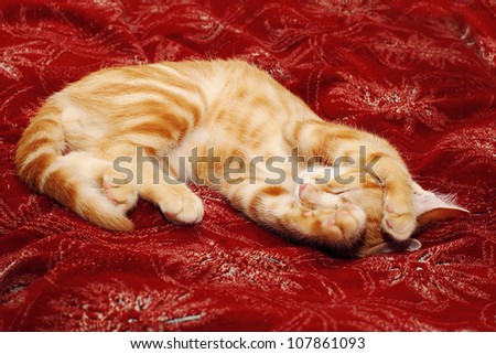 A red kitten grabbing his head over red counterpane - stock photo