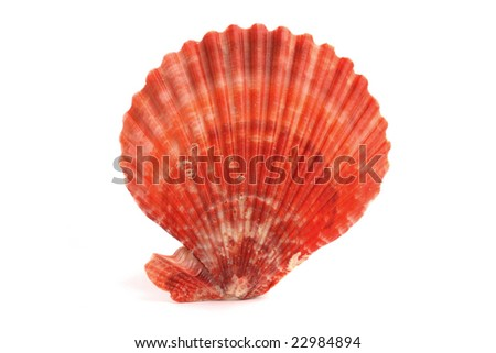 A red orange seashell isolated on white background. - stock photo